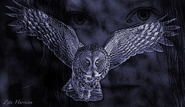 owl ghost blue